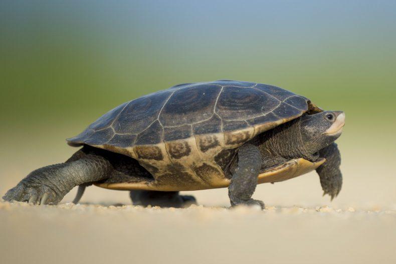 Weight Loss | Tortoise
